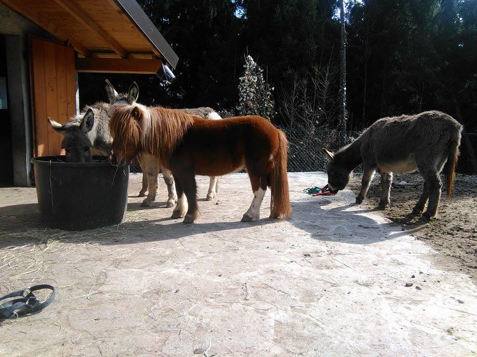 Gli asinelli Gilda, Gilbert, Billy e il pony Leo